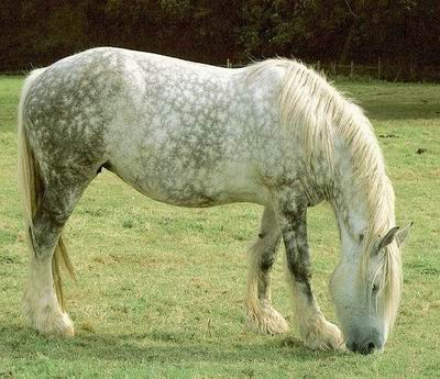 Les hongres Photo_cheval5